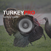 Turkey Calls - Turkey Sounds
