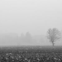 Nebbia a Milano di