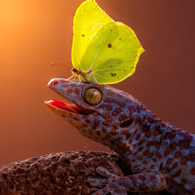 Catch me if you can by Kutub Macro-man - Animals Reptiles ( butterfly, macro, nature, gecko, reptile, close-up, animal )