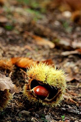 Frutta di stagione di PhotoBySaraPesucci