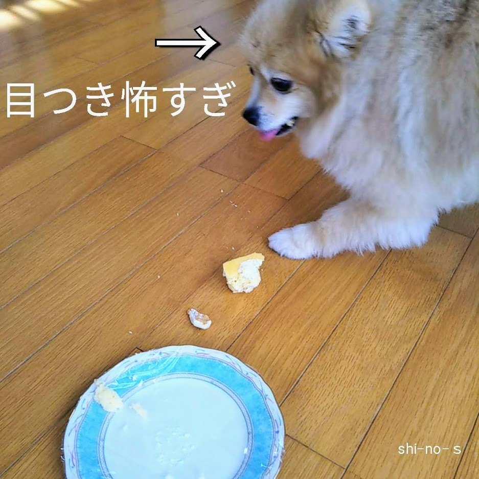犬用ケーキの残りを見る目が怖い