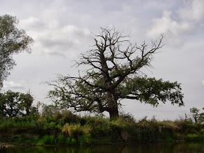 Photo: ciekawe drzewo