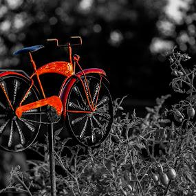 Red Bike by Greg Bennett - Artistic Objects Other Objects ( red, artistic objects, garden ornament, o'fallon garden club, plants, garden, black and white, bike,  )