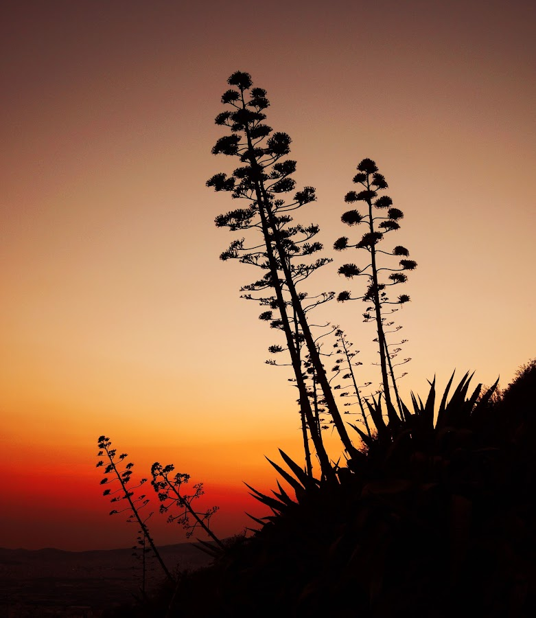NATURE in GREECE  by John Siryana - Nature Up Close Other plants ( orange, red, sunset, greece, plants, sun )