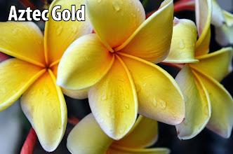 Photo: Aztec Gold