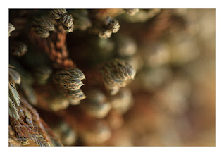 Photo: Eastern Sierras-20120717-714