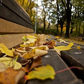 Colors of autumn by Filip Caric - City,  Street & Park  City Parks