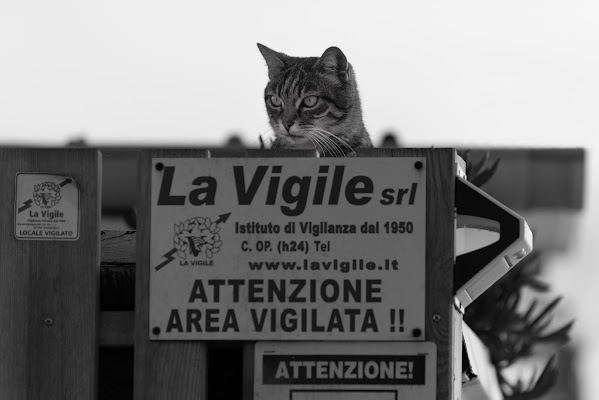 Guardian cat di Giancarlo Lava