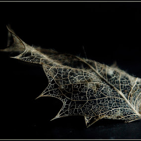 holly leaf ... by Joseph Muller - Nature Up Close Leaves & Grasses ( holly leaf ...,  )