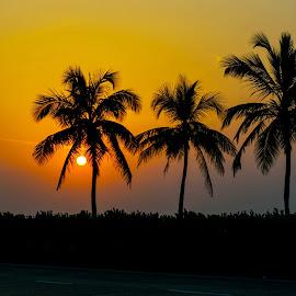 Palms in the breeze as the sun sets by Hariharan Venkatakrishnan - City,  Street & Park  Street Scenes ( palm tree, sunset, street, roads, city )