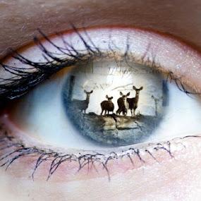 I See Deer by Ann Marie - Digital Art Things ( animals, deer, eye, eyes, beauty )
