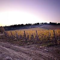Le vigne di Fiesole di