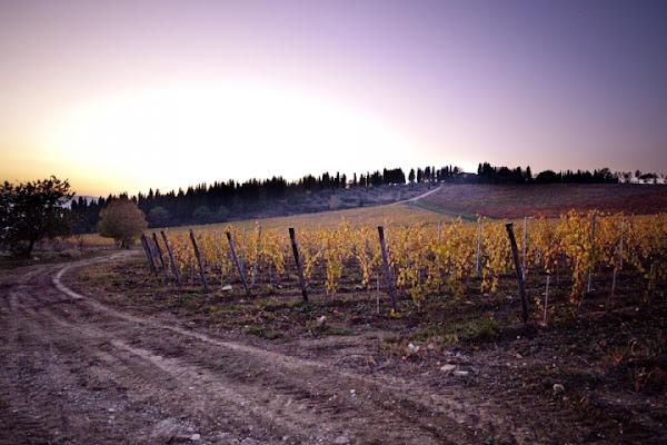 Le vigne di Fiesole di Mirko Macari Fotografia