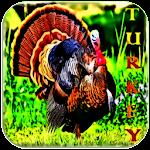 Turkey Sounds and Ringtones Icon