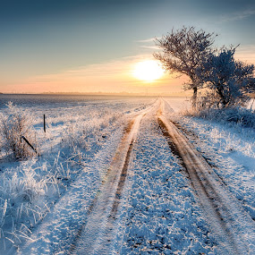 Winter! by Stig Johansson - Landscapes Sunsets & Sunrises ( winter, cold, tree, sunset, snow, road, sun,  )