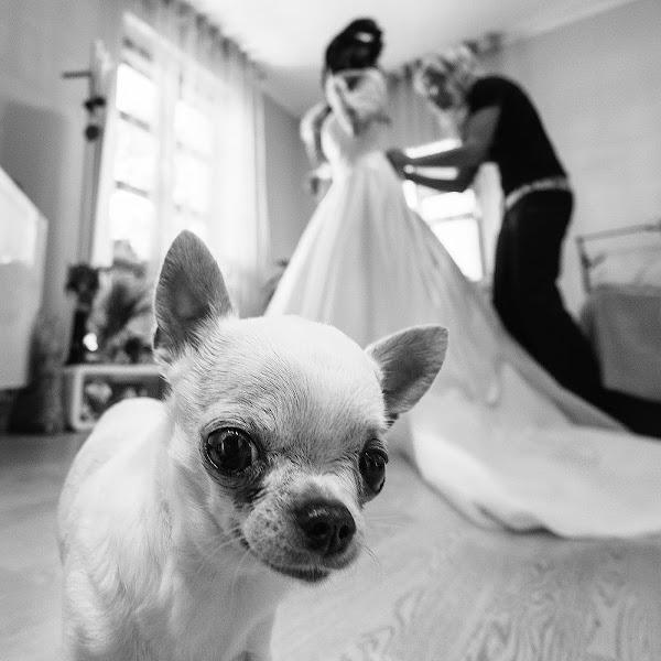Photographe de mariage Asya Belova (Asya). Photo du 19.07.2016