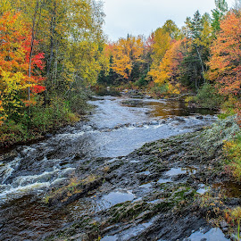 Rainy Fall Day in Maine by Cait DiMaria - Landscapes Forests ( maine, fall colors, fall, nature, autumn, travel, landscape )