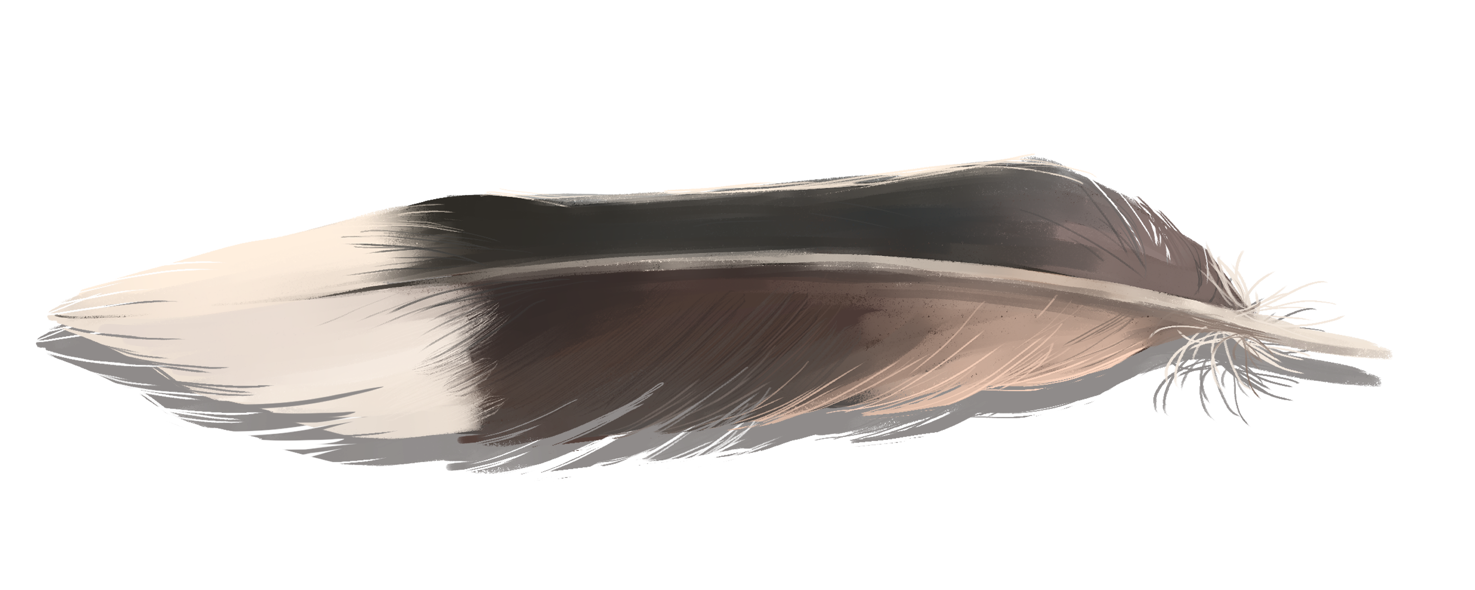 Horizontal mourning dove feather, brown with a white tip.