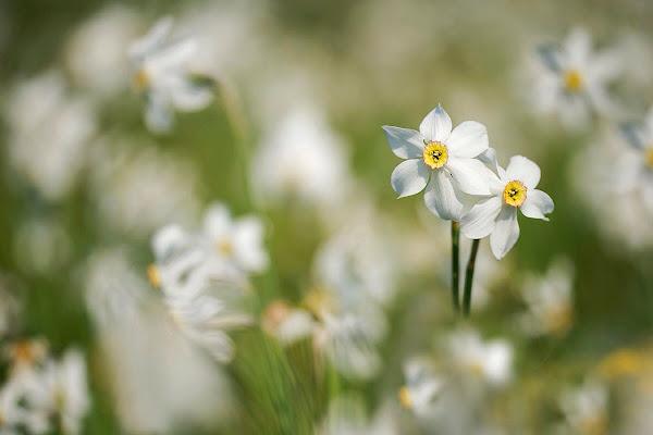 Dettagli floreali di tatytaty