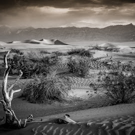by Stephen  Barker - Landscapes Deserts ( sand dunes, stove pipe wells, death valley, desert, wild west )