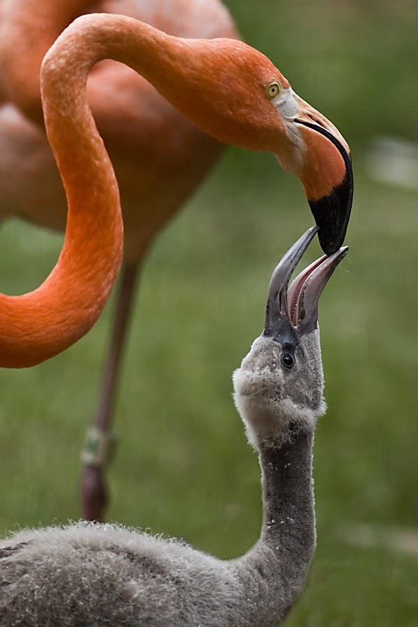 Feeding Time by Rod Schrader - Animals Birds