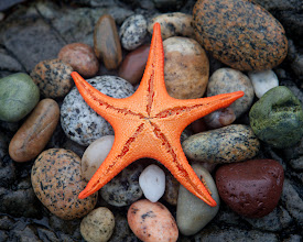 Photo: I assembled these rocks, and Rick added the starfish, to compose this still-life shot.  A polarizing filter helped to reduce glare (they are quite useful on rainy days, not just sunny ones!)