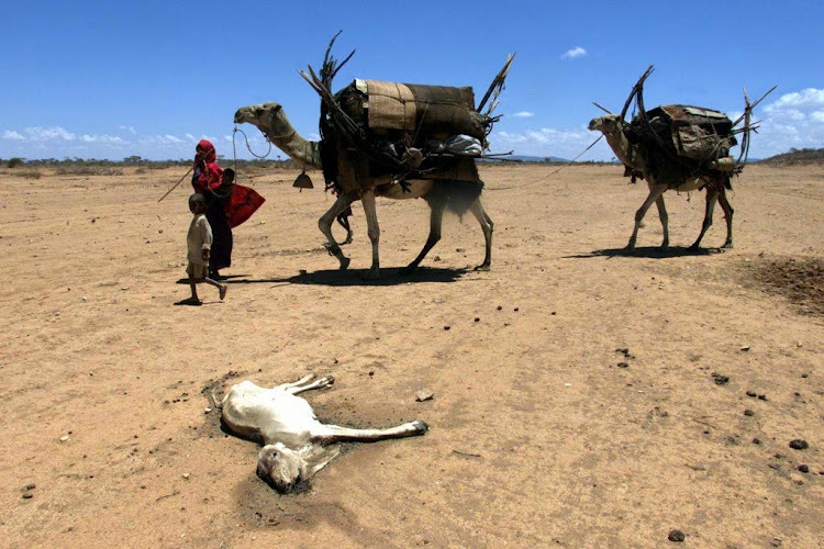 Nomads pass the carcass of a goat in April 2000, near Geladid, southwestern Ethiopia, following three years of drought. Picture: REUTERS