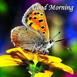 Dobré ráno šťastný den - náhled