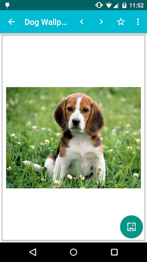 dog wallpapers! screenshot 2