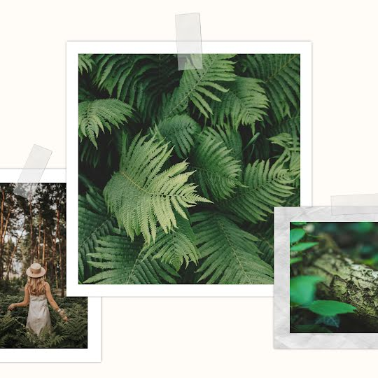 Fern Collage - Instagram Post Template