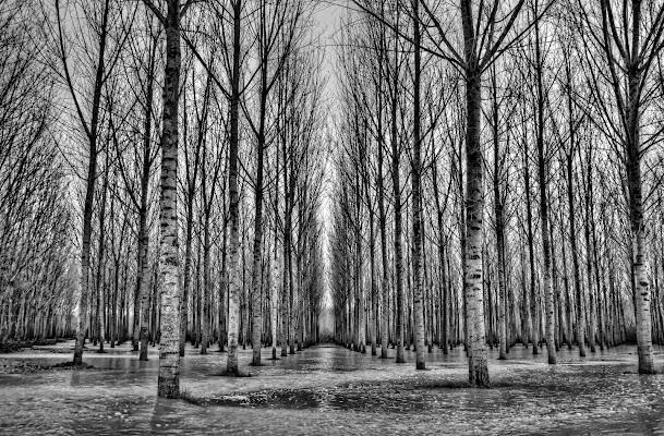 Alberi e ancora alberi.... di Gianluca Presto