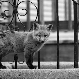 by Steven Liffmann - Black & White Animals