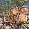 Conception de la maison d'arbre APK