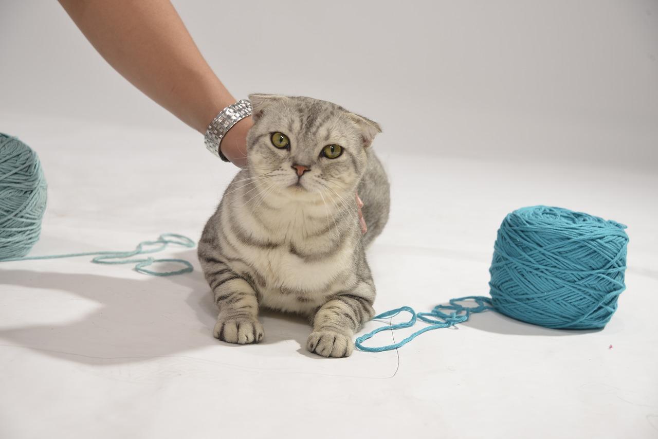 cat-1219037_1280.jpg
