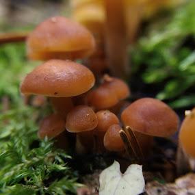 by Gino Libardi - Nature Up Close Mushrooms & Fungi ( mushroom, mushrooms,  )
