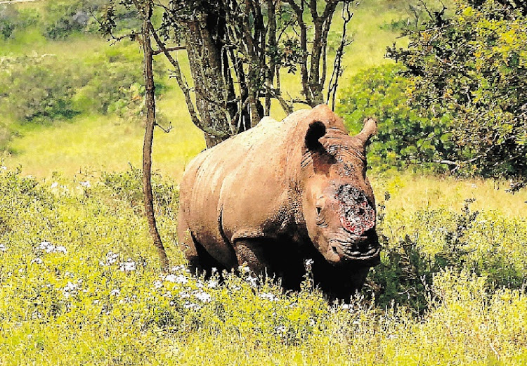 A government committee is examining whether to propose legalisation of the trade in rhino horn. File picture: WEEKEND POST
