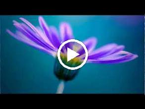 Video: A. Vivaldi  La Notte, Op. 10 n. 2 - Concerto for flute, strings   b.c. in G minor (RV 439) -