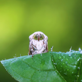 I'm Not An Owl by Ardika Septyawan - Animals Insects & Spiders
