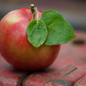 Leafy Apple by H. Ava-Lyn Smith - Food & Drink Fruits & Vegetables ( apple, everett's family orchard )
