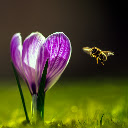Bee New Tab Page Top Wallpapers Themes