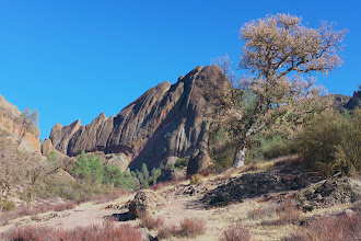 Photo: Tree and Peaks - Pinnacles National Park.We were able to see condors circling above the peaks some of the time.