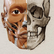 Anatomy for the Artist    P  Icon