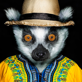 Louis the Lemur by Michal Challa Viljoen - Digital Art Animals ( jacket, person, zoo, advertising, edit, yellow, lemur, composite, photography, animal, photoshop,  )