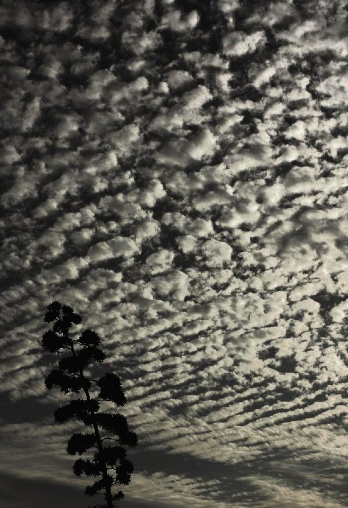 Cielo a pecorelle di paolo-spagg