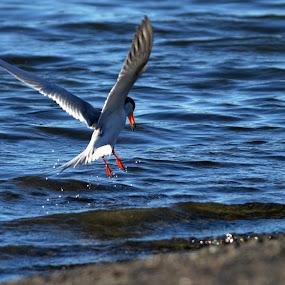 by Maithili Saoji - Animals Birds