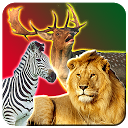 Safari Animal Hunting APK