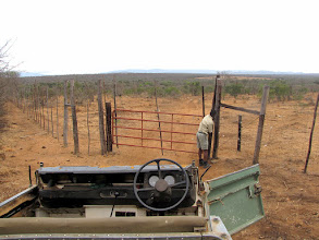 Photo: Mkhaya GR - one of many gates inside the reserve