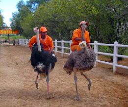 Photo: An ostrich race