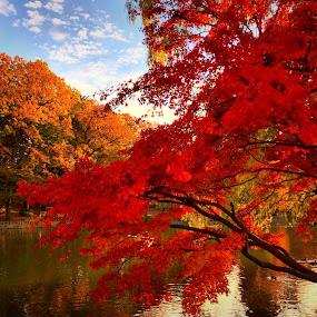 by Bill      (THECREOS) Davis - City,  Street & Park  City Parks ( #trees, #fall, #tokyo, #shakuji, #orange, #autumn, #japan, #red,  )