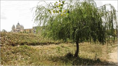 Photo: Salcie (Salix)  din Turda, dig Poiana - 2019.09.04